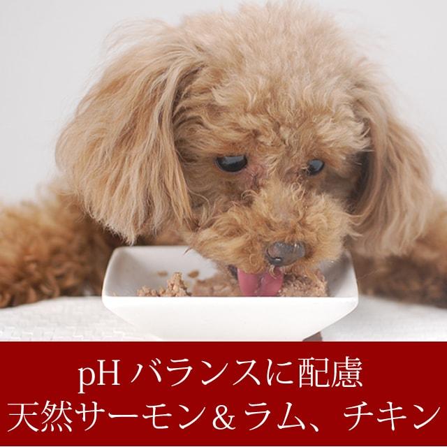 FORZA10療法食|ウリナリーアクティウェット100g×12缶セット&尿路元気90g  犬用