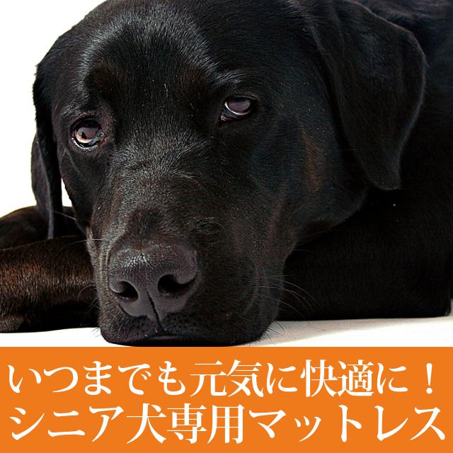 老犬用 ペットケアマットNEO SSサイズ |シニア犬 爽快潔リビング