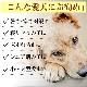老犬用 ペットケアマットNEO Mサイズ |シニア犬 爽快潔リビング