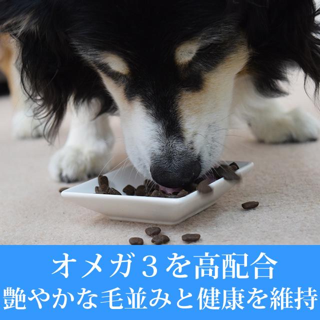 【初回送料無料】AATU(アートゥー)パピー サーモン  ドッグフード 1.5kg スターター