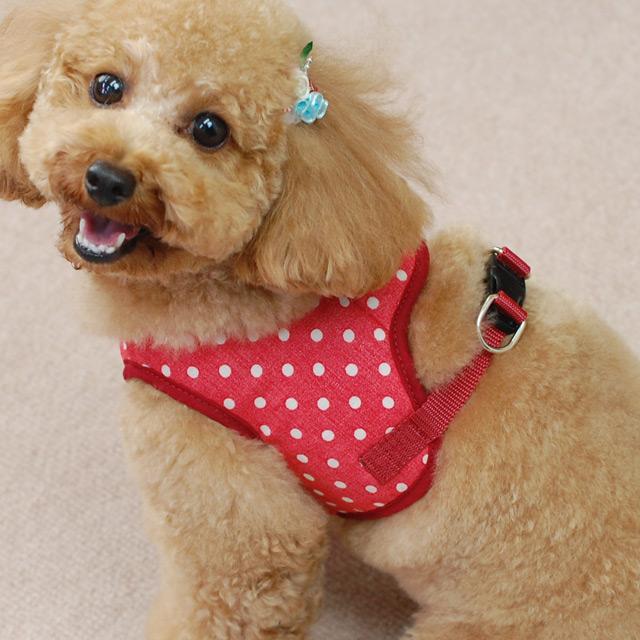 ASHUウェアハーネス水玉&リードセット Mサイズ(小型犬用)