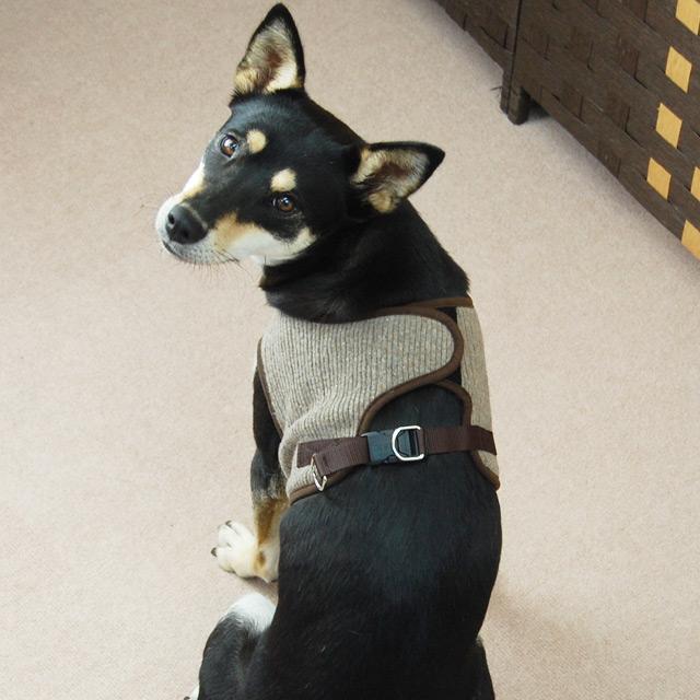 ASHUウェアハーネス ニットセット LLサイズ(中型犬用)