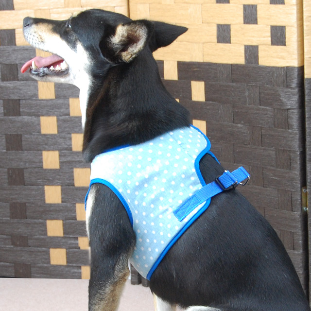 ASHUウェアハーネス 水玉 LLサイズ(中型犬用)【リードは別売り】