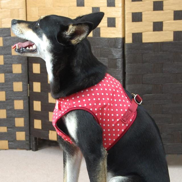 ASHUウェアハーネス 水玉 XLサイズ(中型犬用)【リードは別売り】