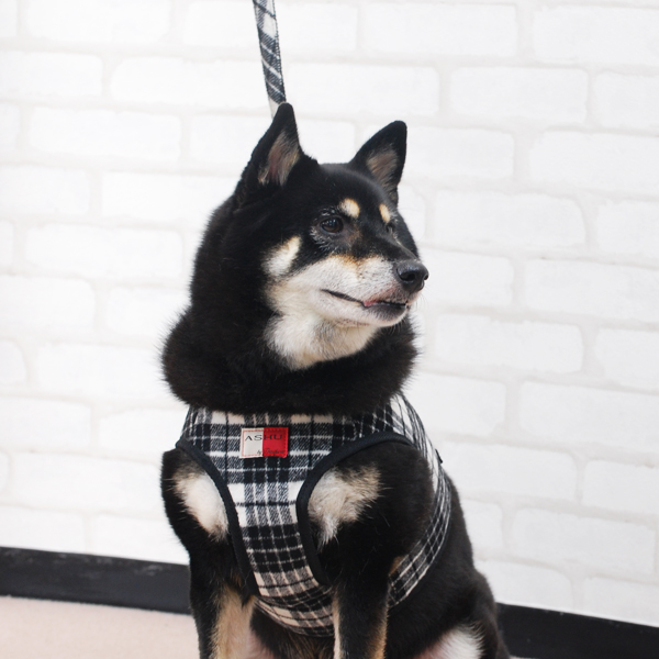 ASHUウェアハーネス ウールチェックセット XLサイズ(中型犬用)※無くなり次第終了