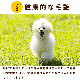 犬用 生馬肉 冷凍 老犬用馬肉 小分けトレー コエンザイムQ10 タウリン BCAA入り 3kg 5kg 10kg【a0300】