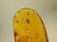 ドミニカ産の虫入り琥珀(コハク)-1