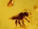 ドミニカ産の虫入り琥珀(コハク)-2