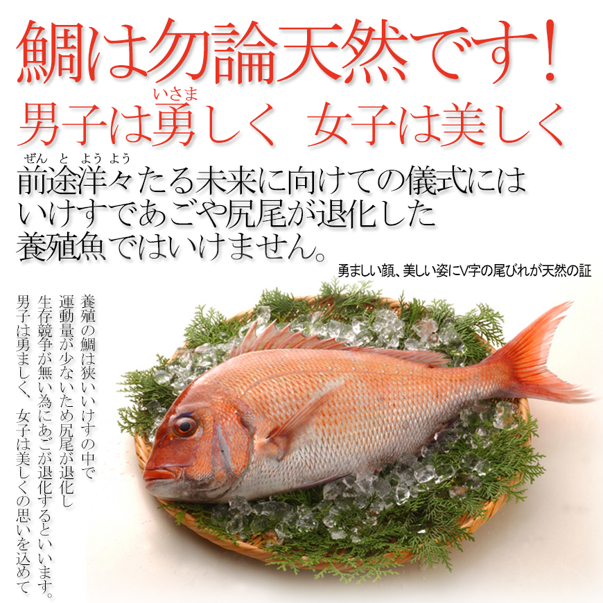 (通信販売)お食い初め料理・ご購入膳/おくいぞめりょうりごこうにゅうぜん ※歯固め石付※【全国通販可能-東京近郊以外-】