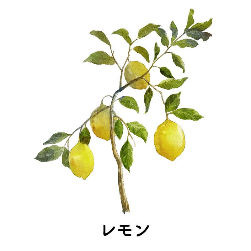 阿原 YUAN  レモンシャンプー