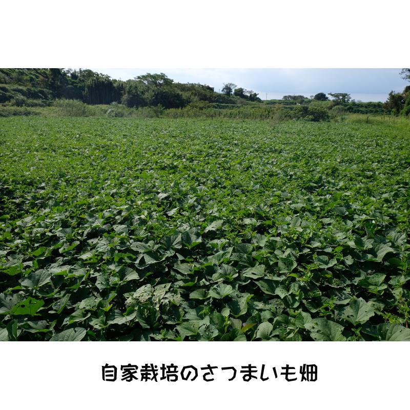 【八千代伝酒造】八千代伝 白こうじ仕込み  720ml