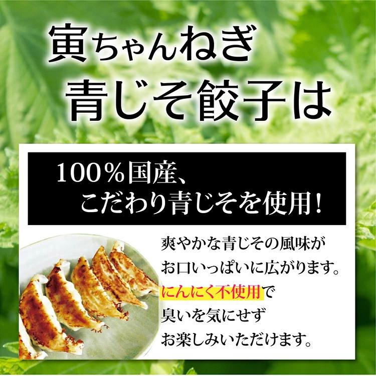 【送料無料】寅ちゃんねぎ青じそ餃子