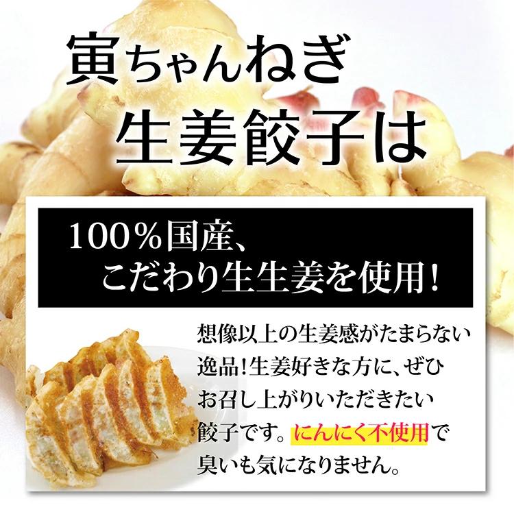 【送料無料】寅ちゃんねぎ生姜餃子