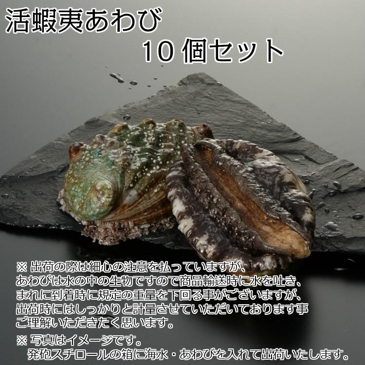 【活】活蝦夷あわび 50〜60g 10個セット