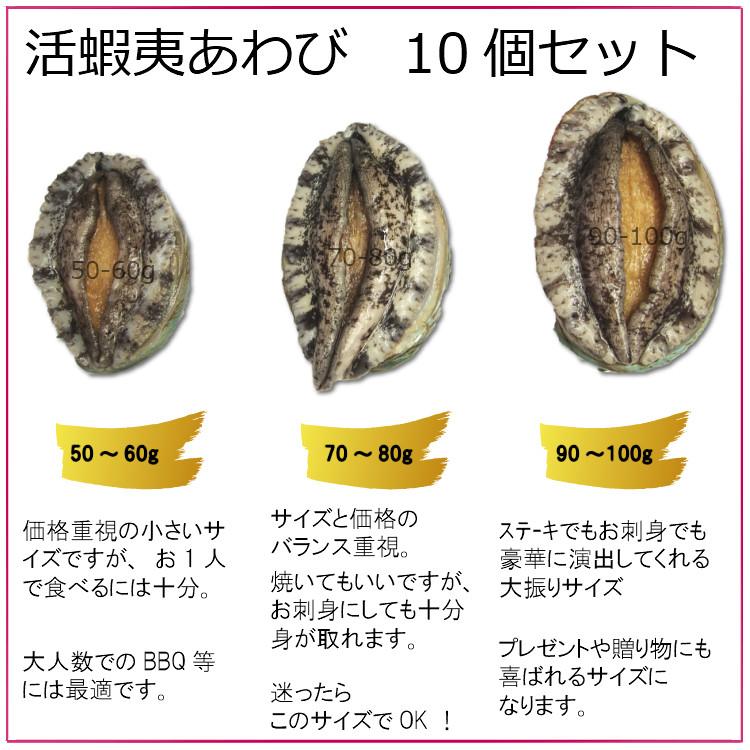 【活】活蝦夷あわび 70〜80g 10個セット