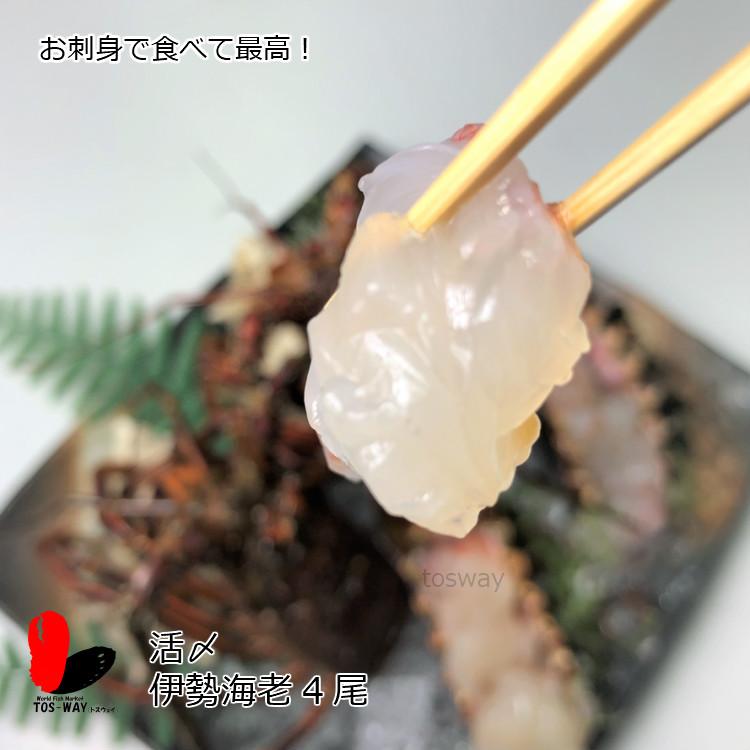 【冷凍】 活〆冷凍伊勢海老 300〜350g 4尾セット
