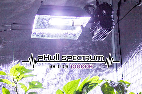 フルスペクトラム_CMH315W_10000K球(フィニッシュ用)