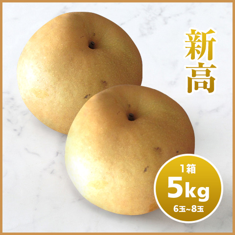 【期間限定】千葉の採れたて梨「新高」(5kg)