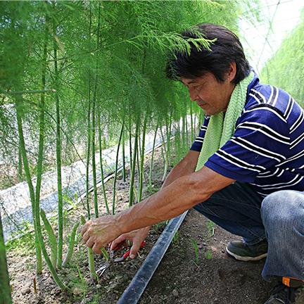 北海道産直 アスパラガス(1kg)