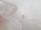 キープ・ワインズ 【ライブラリー・セレクションズ】エル・リーノ アルバリーニョ ロスト・スロー・ヴィンヤード 2015年 アメリカ カリフォルニア クラークスバーグ 白ワイン サスティナブル 亜硫酸ゼロ