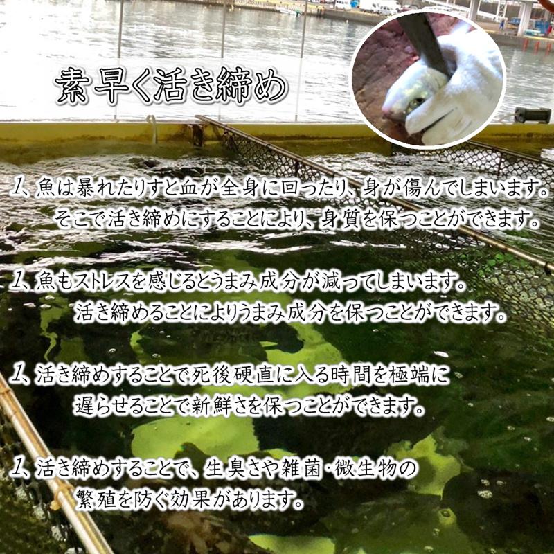 真鯛 活き締め 約1.5kg ×2尾 刺身用・生食用 【 小田原港より即日発送 うまいもの市場 活〆シリーズ 】 鮮度重視、旨味が違います 【冷蔵便】