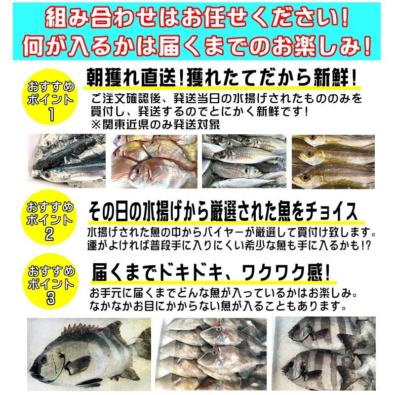 鮮魚セット 小田原 朝獲れ 鮮魚ボックス セット 3kg  【その日に水揚げされた鮮魚の詰合せ】早朝、競り落とした魚を詰め込んで即日配送いたします【冷蔵便】