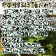 かんぱち・活き締め・約3.0�・刺身用・生食用【小田原港より即日発送/うまいもの市場・活〆シリーズ】鮮度重視、旨味が【冷蔵便】