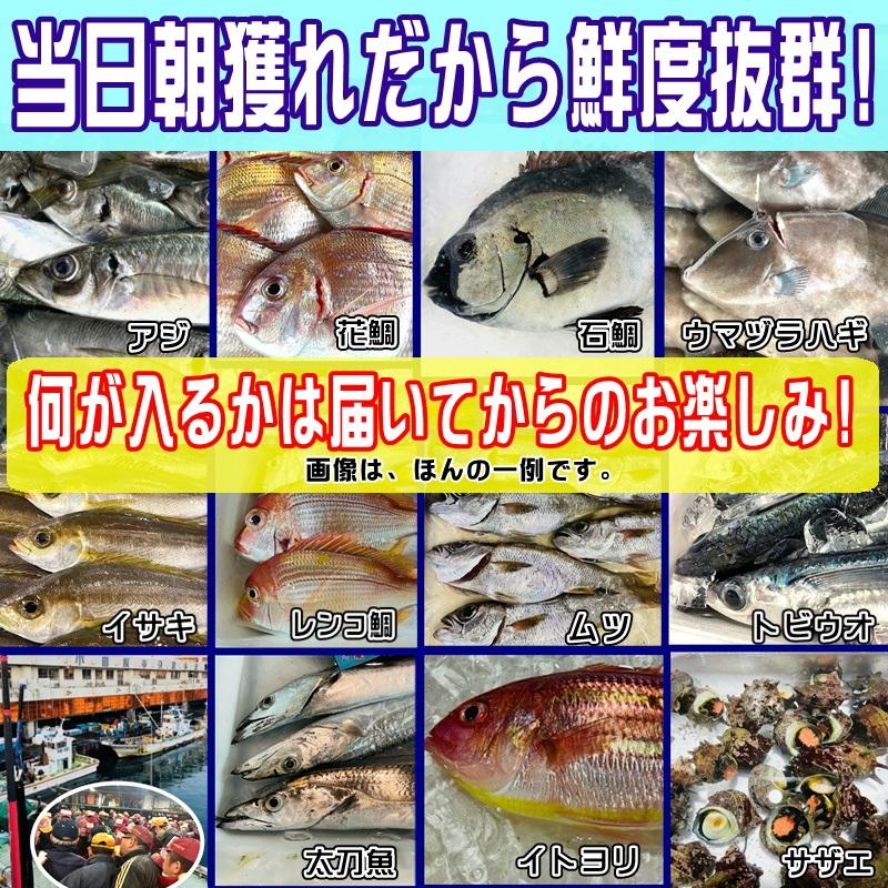 鮮魚セット 小田原 朝獲れ 鮮魚ボックス 2kg  【その日に水揚げされた鮮魚の詰合せ】早朝、競り落とした魚を詰め込んで即日配送いたします【冷蔵便】