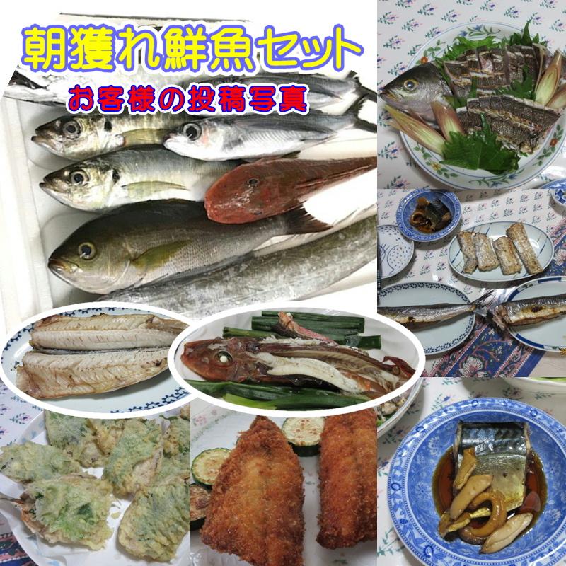 鮮魚セット 2kg (お任せセット) 当日市場内でお買い得商品を集めて送ります【冷蔵便】