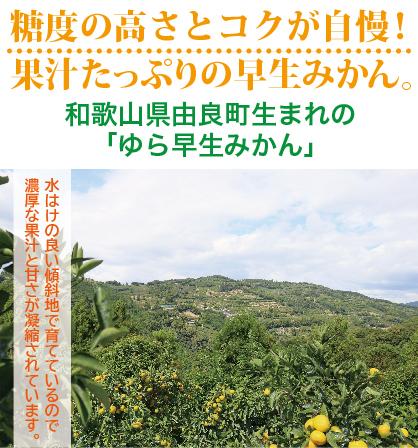 秋のコク旨みかん「ゆら早生みかん」5kg箱入り(税込・送料無料)