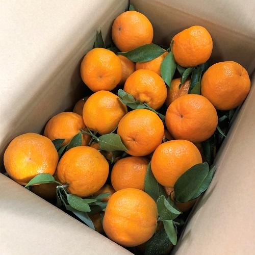 榎本学さんの「木熟葉付きポンカン」5kg箱入り 28〜30玉入 (税込・送料別)