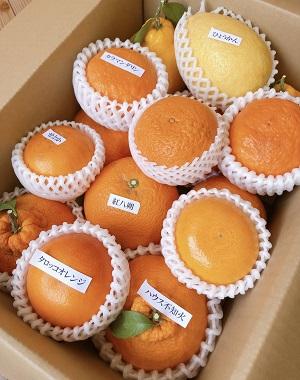 愛須さんの「旬の柑橘詰め合わせ」 約5kg箱入 (税込・送料別)