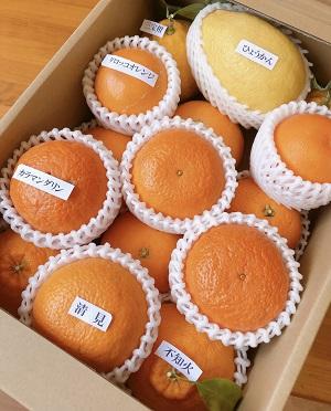 愛須さんの「旬の柑橘詰め合わせ」 約3kg箱入 (税込・送料別)
