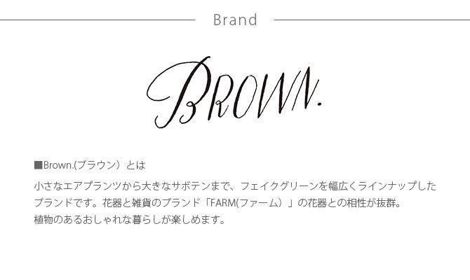 Brown. ブラウン アロエベラ ポット 48