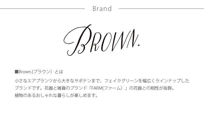 Brown. ブラウン フェイクグリーン ウチワサボテン ポット 31