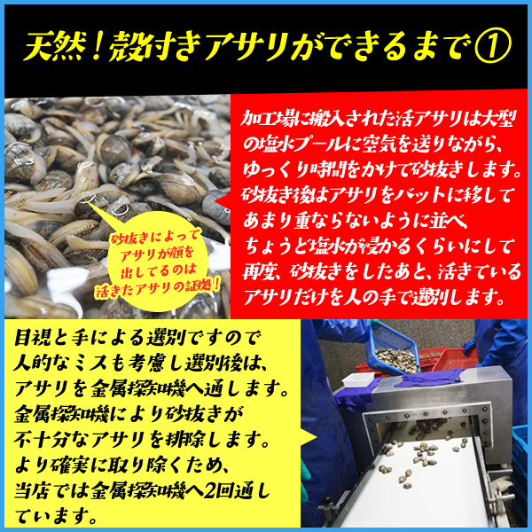 天然 殻付きアサリ どっさり1kg