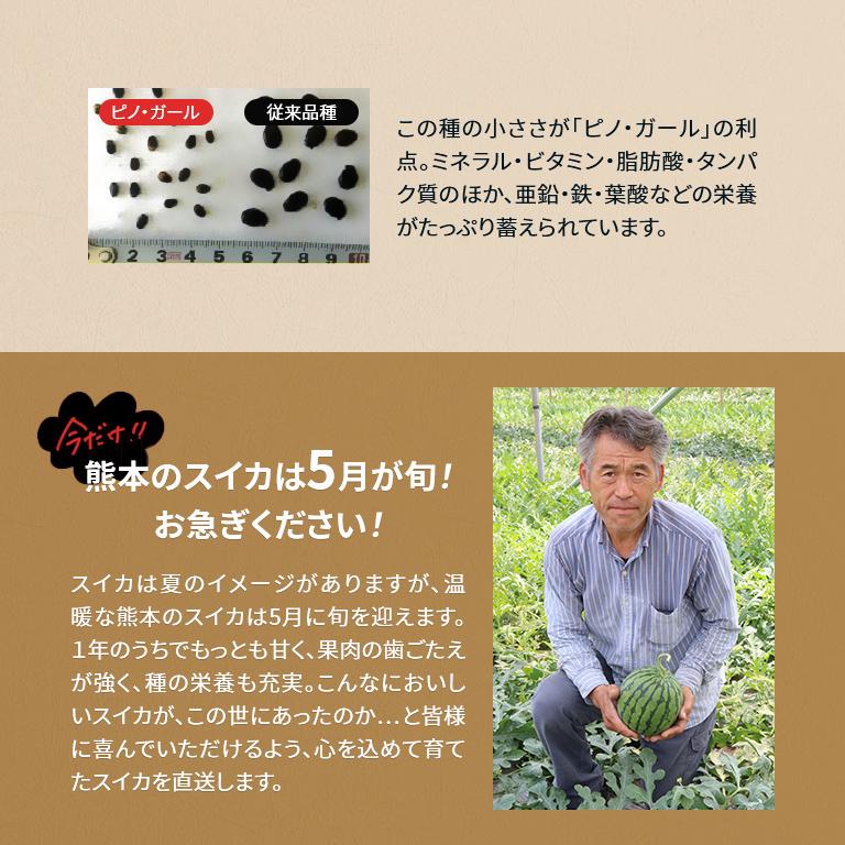 【産地直送】熊本産 味咲すぅいーと 春スイカ「羅皇ザ・スウィート」(3L~ 約8~9.5kg)