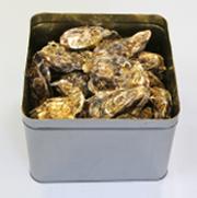 浦島太郎牡蠣:殻付き1kg(8〜11個)