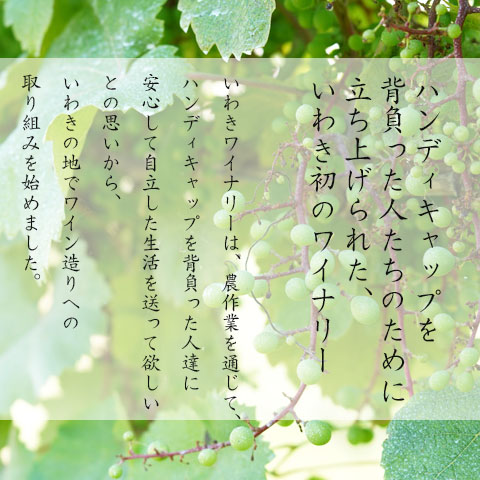 KOSHU 2019  新ヴィンテージ
