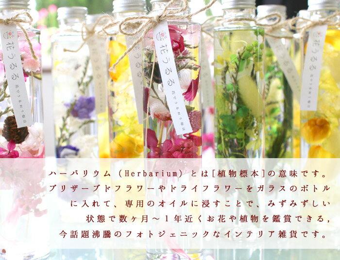 花うるるのハーバリウム「ボタニカリウム」2色