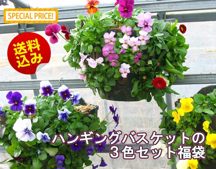 パンジー&ビオラのハンギングバスケット 寄せ植え 「3色セット福袋」(シンプル)開花期:今から春まで 2019 初売り 福袋 ハッピーバッグ)