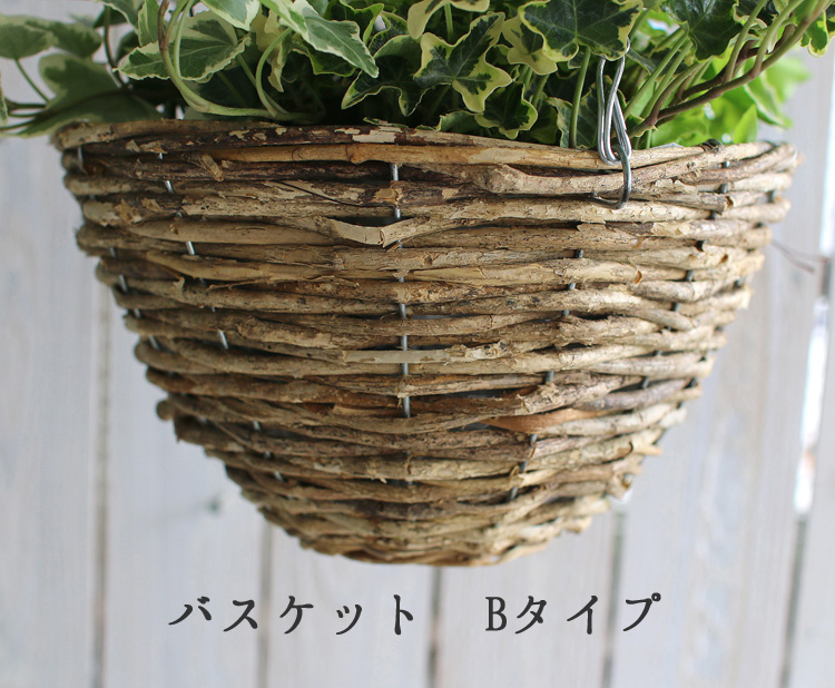 「アイビーの吊りカゴ寄せ植え」