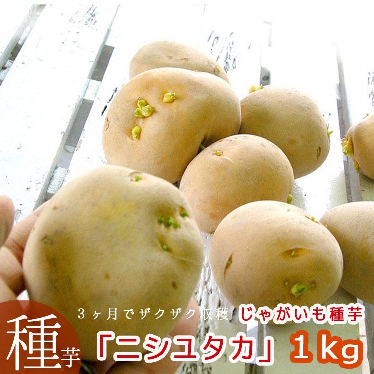 【じゃがいも 種芋 種イモ】 長崎県産ホクホク「ニシユタカ 1kg」 [検査合格済]
