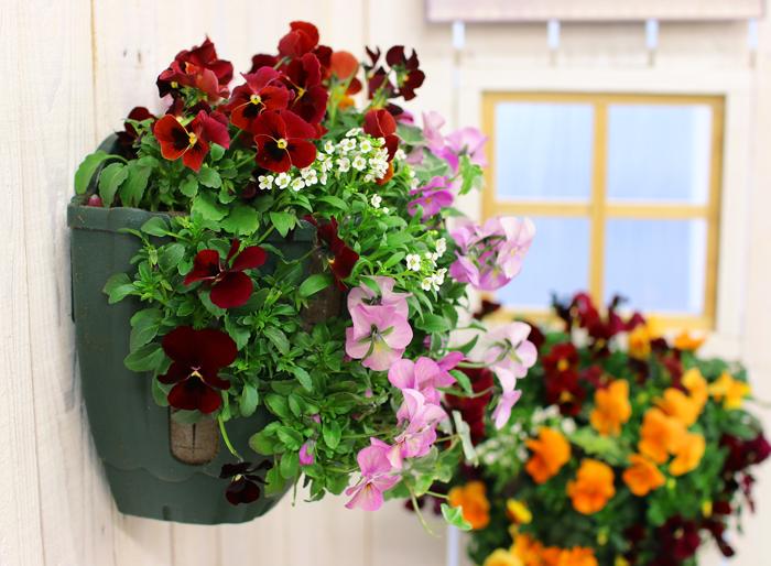 ビオラのハンギングバスケット寄せ植え 「スイート ハート」(シンプル)開花期:今から初夏まで