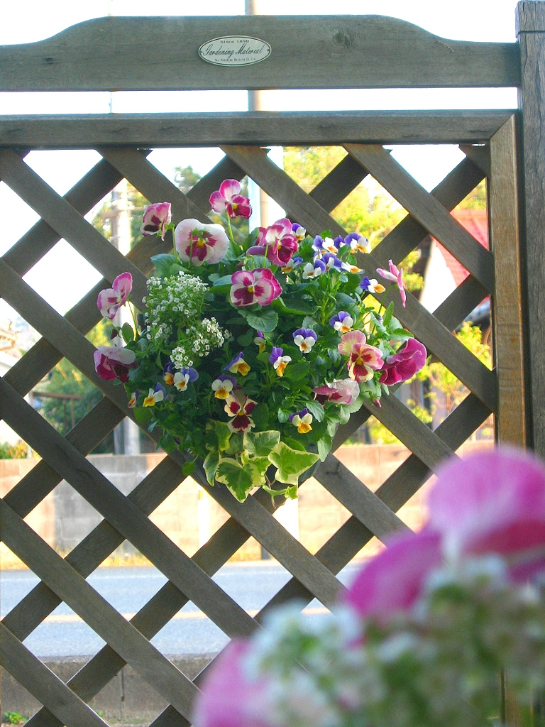 パンジー&ビオラのハンギングバスケット寄せ植え「いちごピーチ」(シンプル)開花期:今から初夏まで