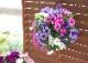 ペチュニアのハンギング寄せ植え  [パステル (シンプル)] (寄せ植え/苗/セット/ギフト/花/寄植え/鉢植え/壁掛け/ハンギング/春/夏/通販