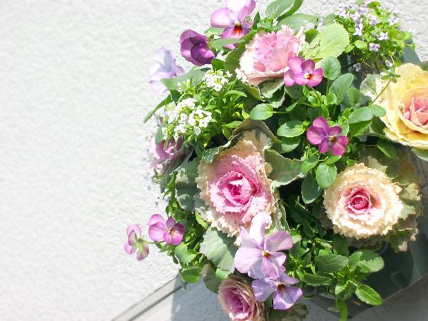 【お正月飾りに】【送料無料】お正月を彩る-葉牡丹(ハボタン)のハンギング寄せ植え「桃」