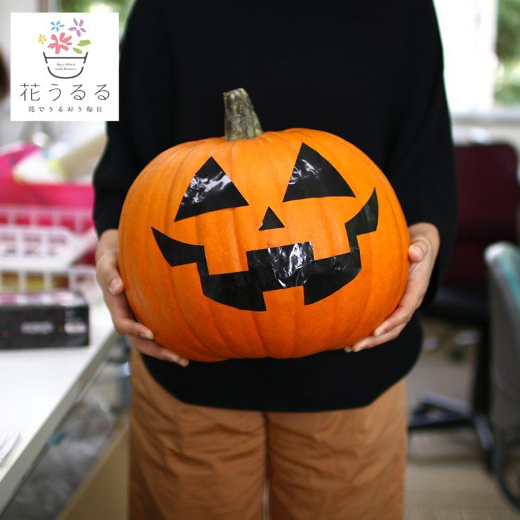 """【送料無料】「ハロウィン用に 巨大な本物カボチャ"""" Lサイズ(直径約27cm)"""" (顔のシール付き!) 」"""
