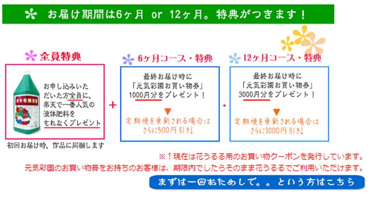 「ハンギングバスケット定期便〜ゴールド」【6回コース】(半年〜1年間お届け)