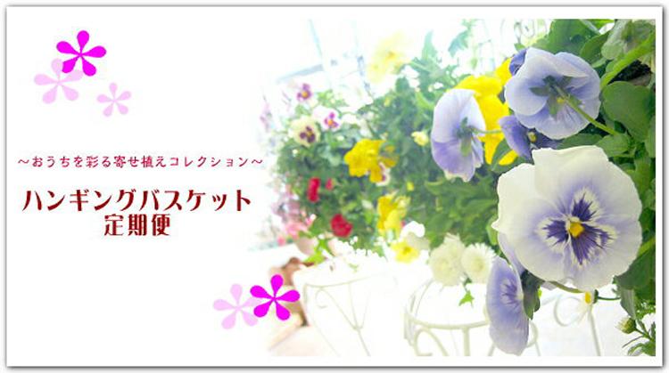 「ハンギングバスケット定期便〜シルバー」【6回コース】(半年〜1年)